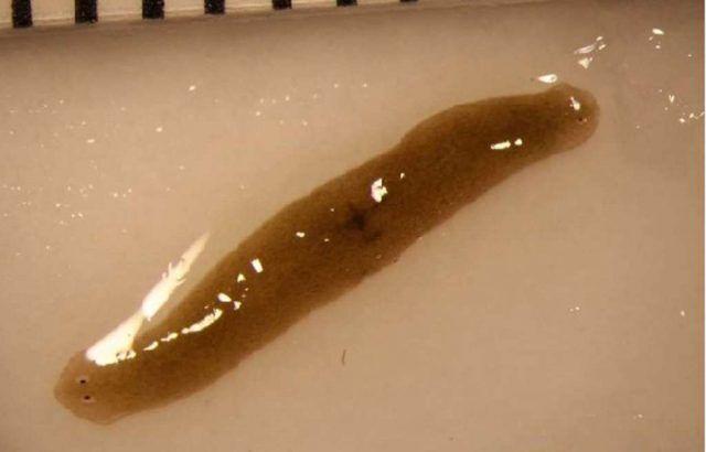 platworm4-640x410.jpg