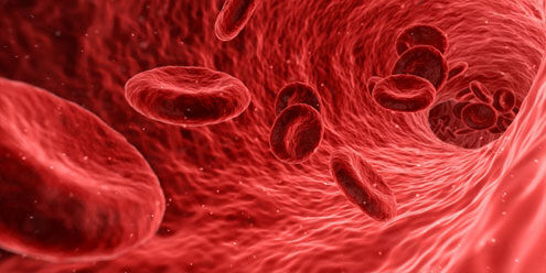 krvotek.jpg