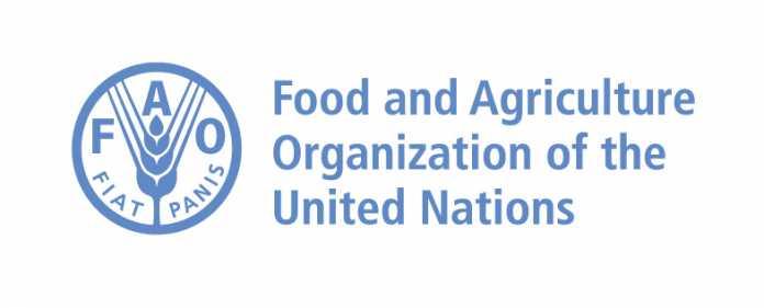 FAO-Hungarian-Government-Scholarship-2018-2019-Introduction-and-procedures.jpg