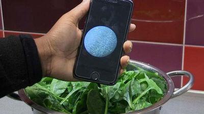 Оваа апликација ќе препонава дали има бактерии во храната