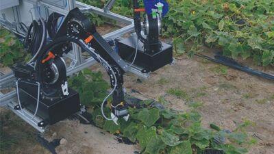 Робот што помага во берба на краставици