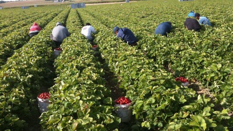 sezonski-radnici.jpg