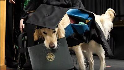 Куче доби факултетска диплома