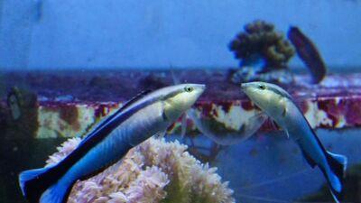 Дали рибите можат да се препознаат во огледало?