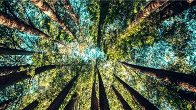 Австралија ќе посади 1 милијарда дрвја во наредните 11 години