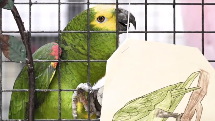 ucilisen-papagal.jpg