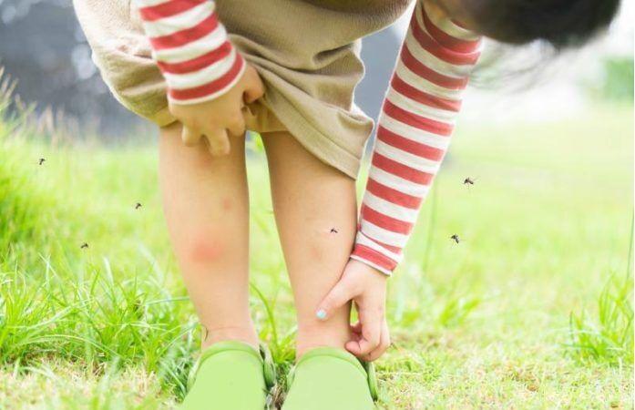 Oслободете се од комарците за секунда – потребни ви се само две состојки